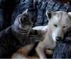 Cat Massages Dog.
